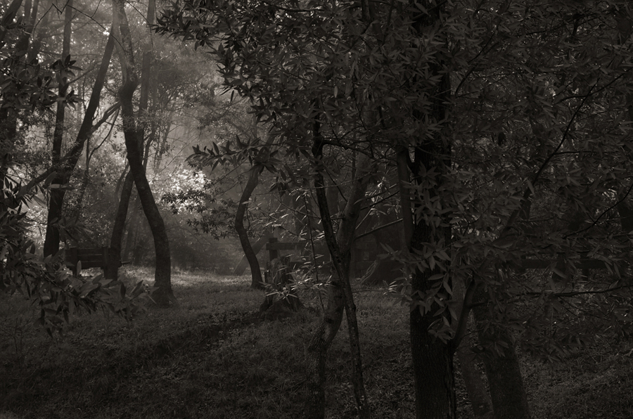 Forest-misty-light-bw-III_sm.jpg