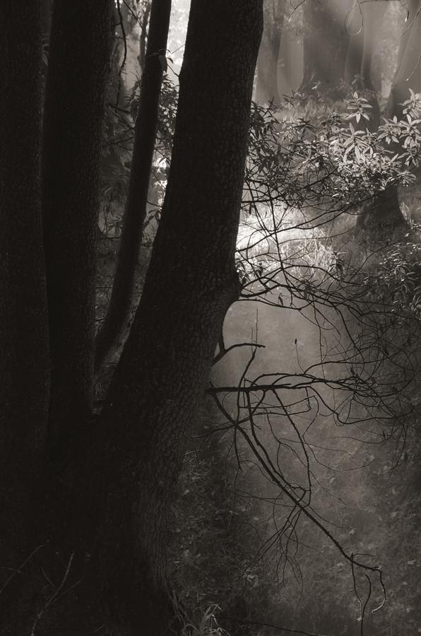 Forest-misty-light-bw_sm.jpg
