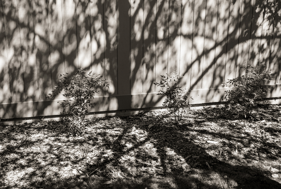 tree-shadow-on-fence_sm.jpg