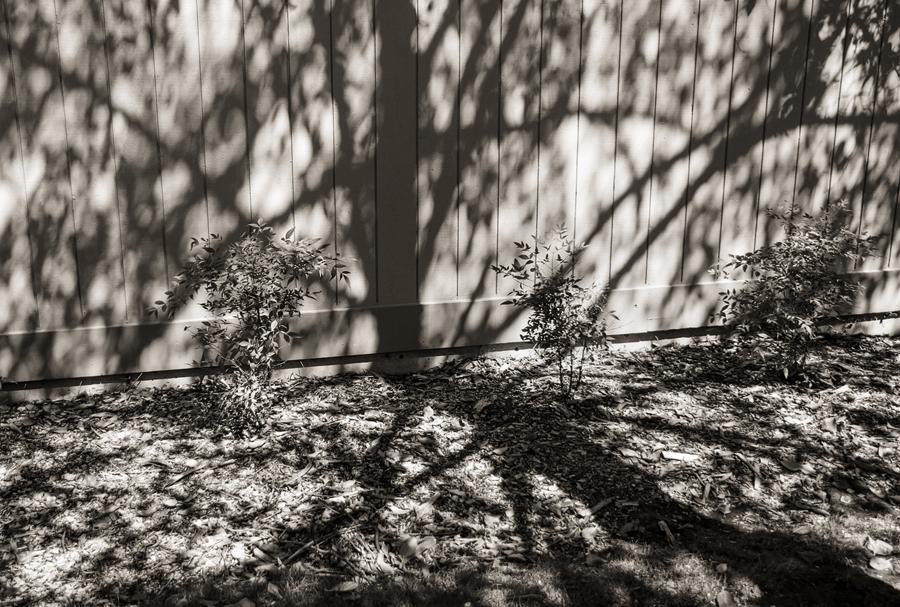tree-shadow-on-fence_sm.jpg
