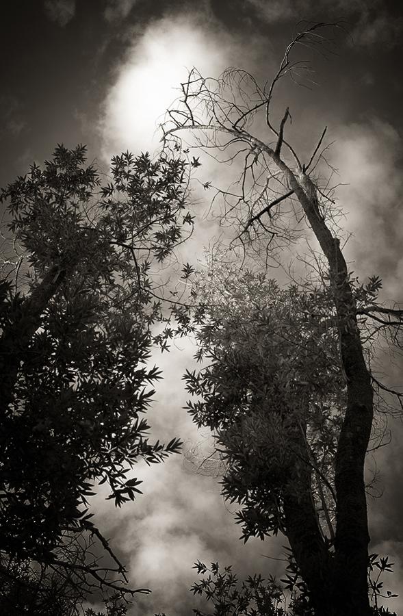 denuded-tree_sm.jpg