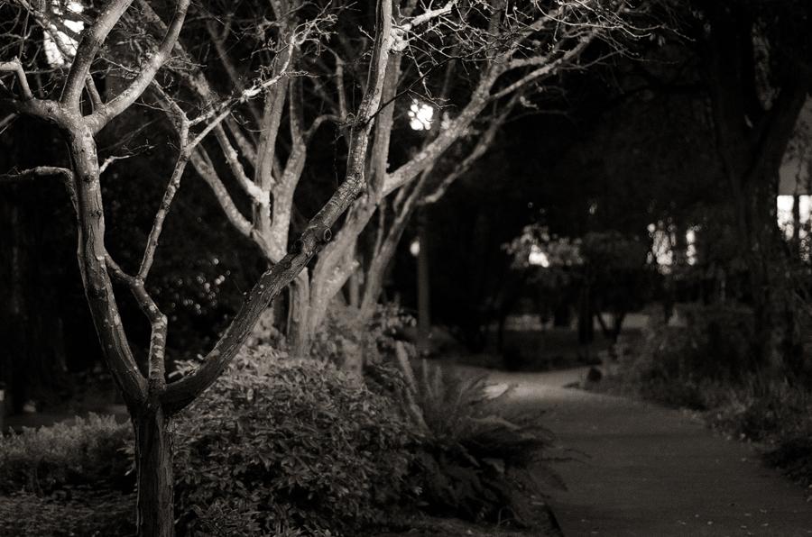 night-path-II_sm.jpg