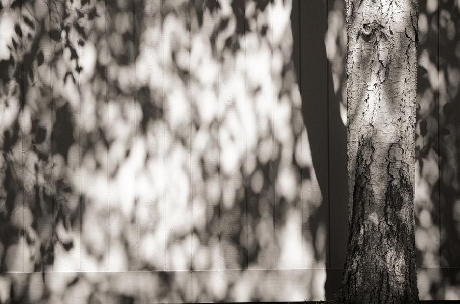 shadow-on-fence-II_sm.jpg