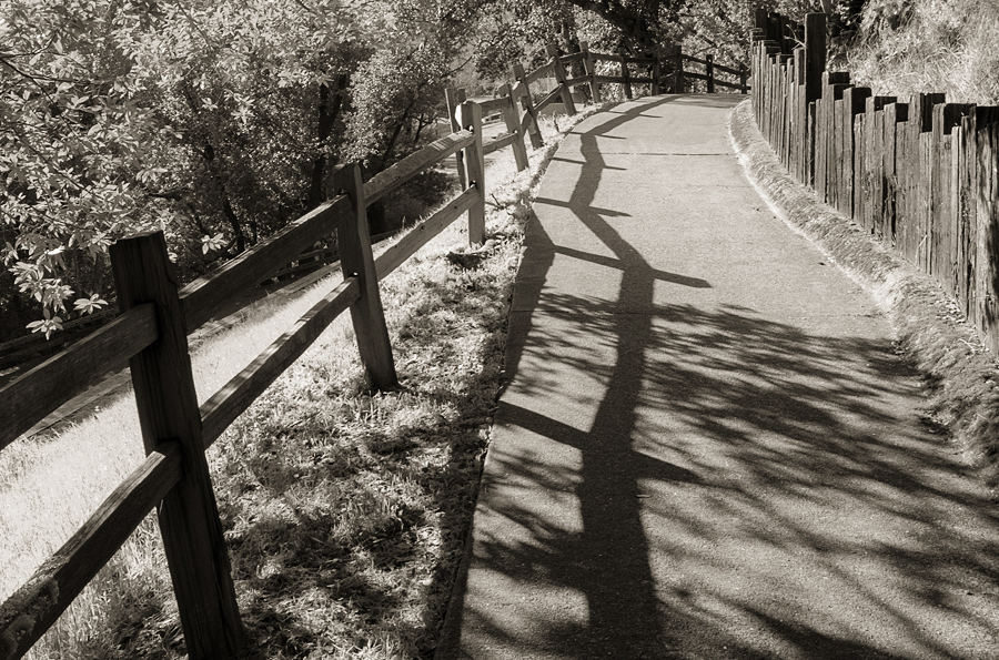 fence-shadow_sm.jpg