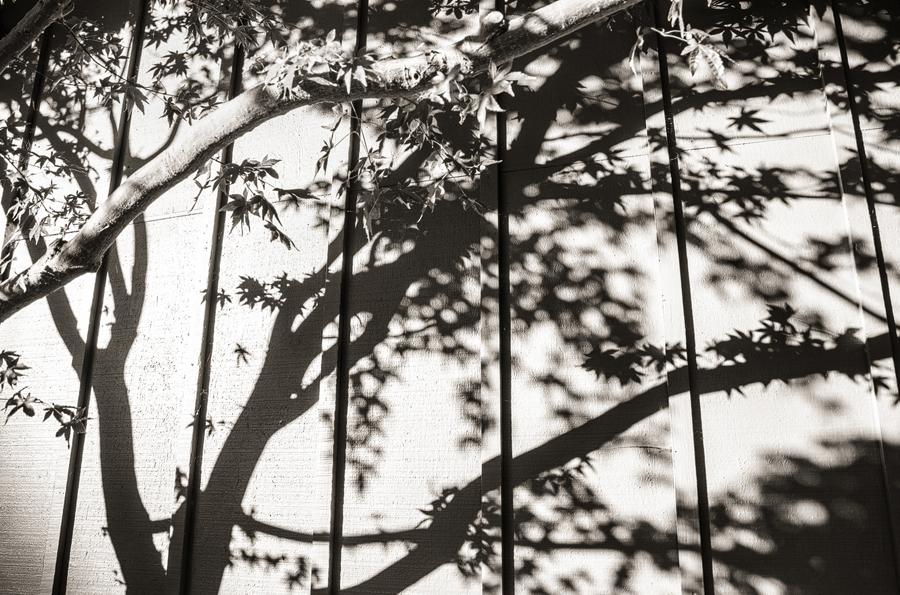 Tree-Shadow-on-House_sm.jpg