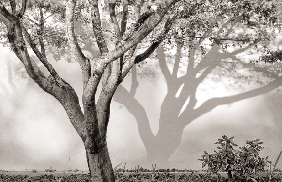Library-Tree_sm.jpg