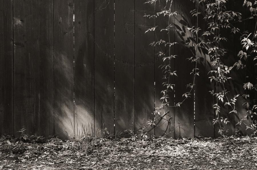 Fence-in-Miwok-Park_sm.jpg