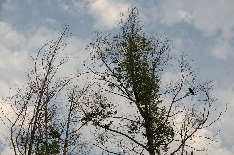 denuded-branches-II_sm.jpg