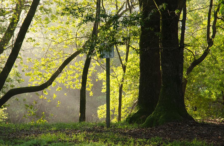 Forest12_sm.jpg