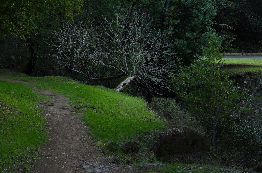 Forest4_sm.jpg