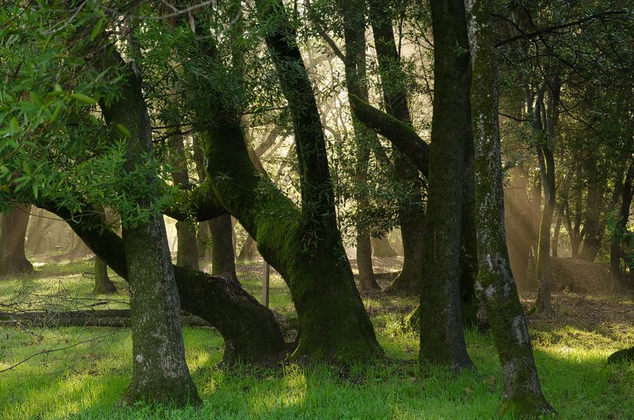 Forest1_sm.jpg