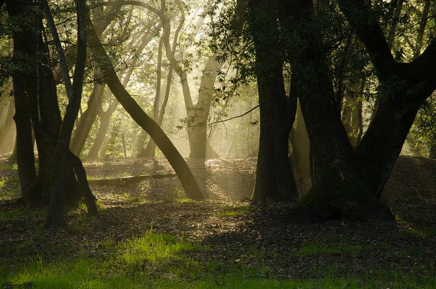 Forest3_sm.jpg