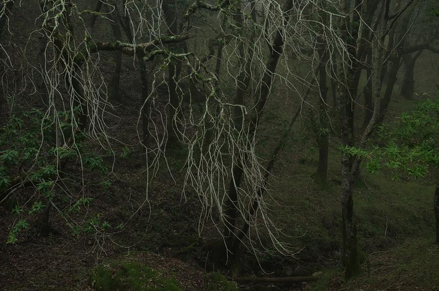 foggy-branches_sm.jpg