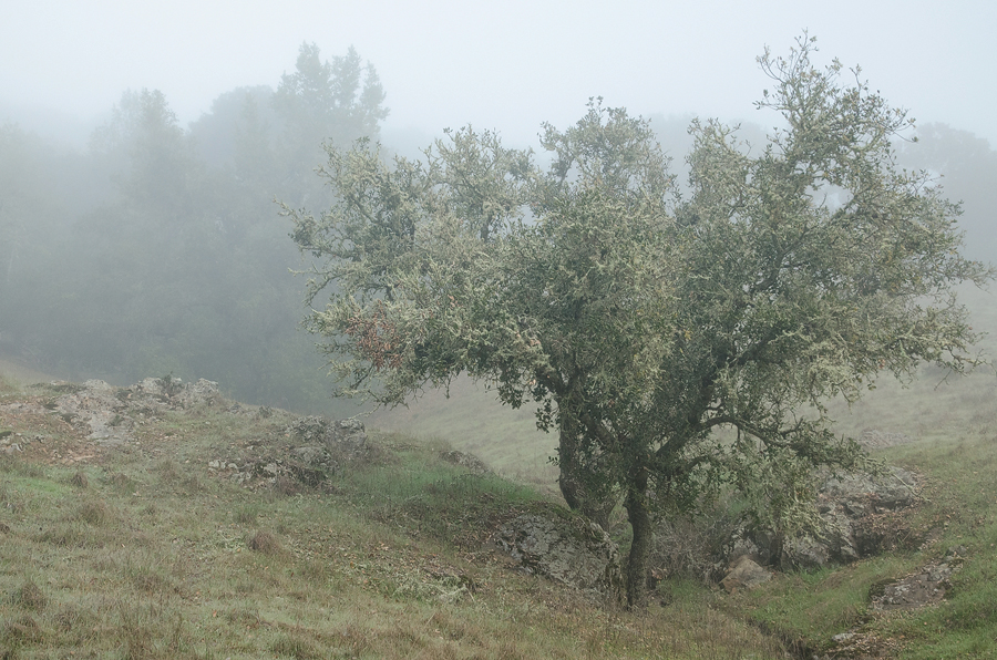foggy-tree_sm.jpg