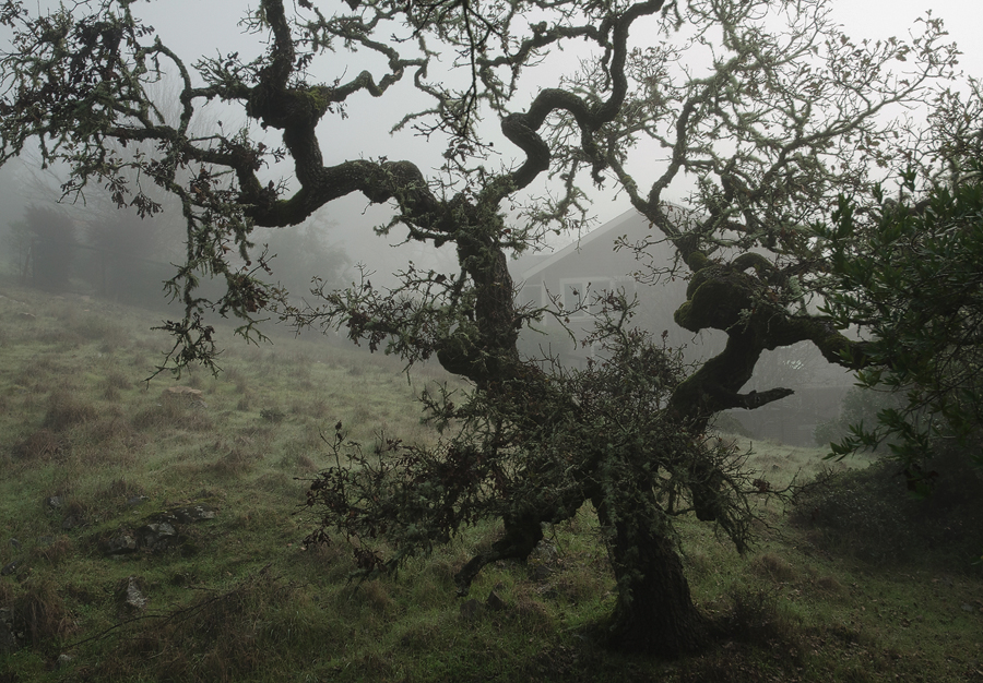 foggy-tree-2_sm.jpg