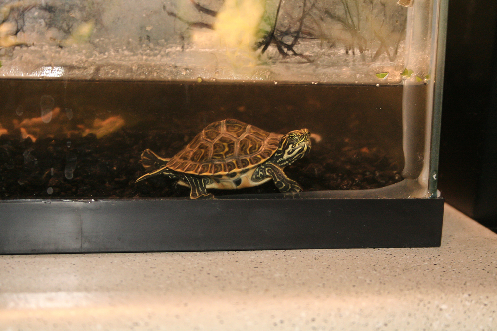 66. paul has adopted the habit of going to the front of his tank and demanding worms.