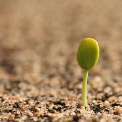 AfA_Seed.
