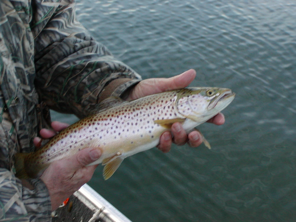 Brown full fish.JPG