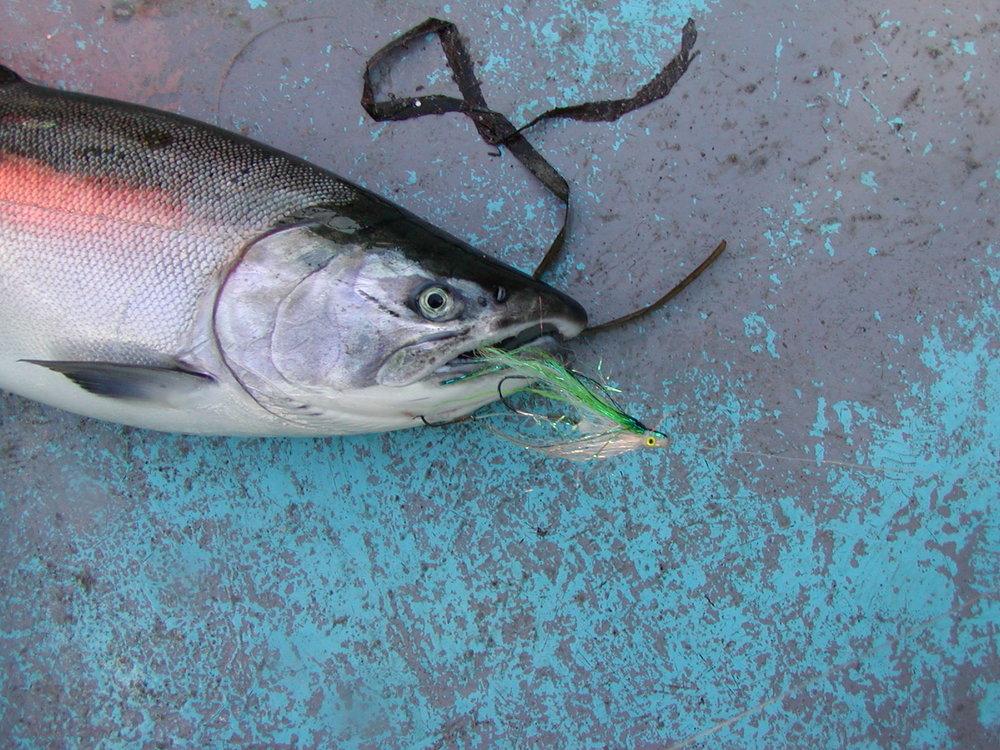 Coho green tube fly II.JPG