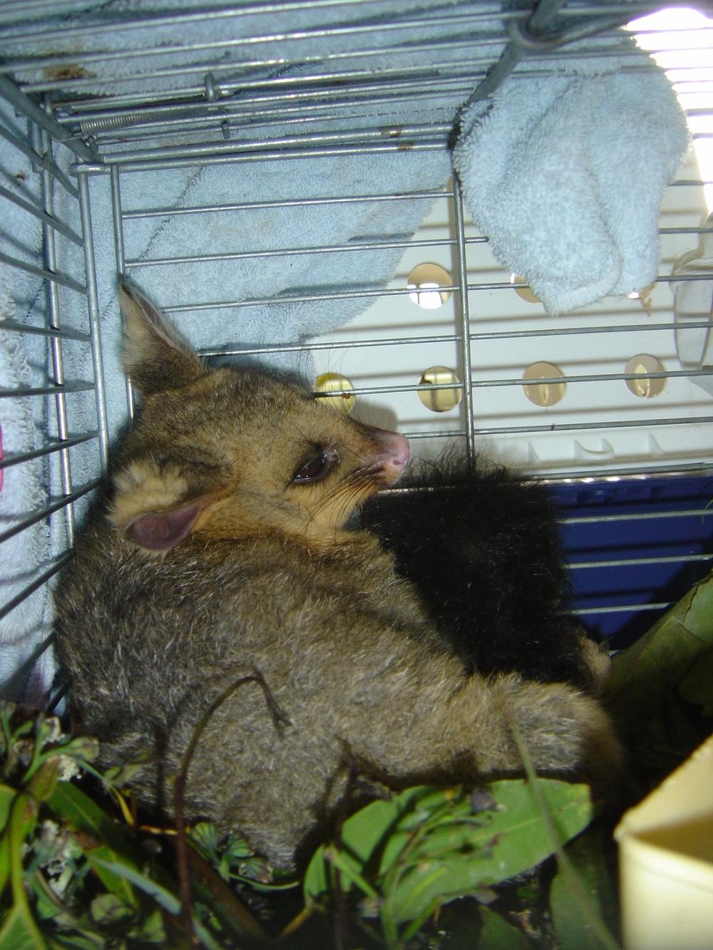 OZ animal (1).JPG