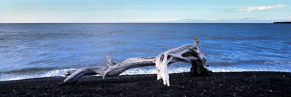 Beached driftwood : Kona