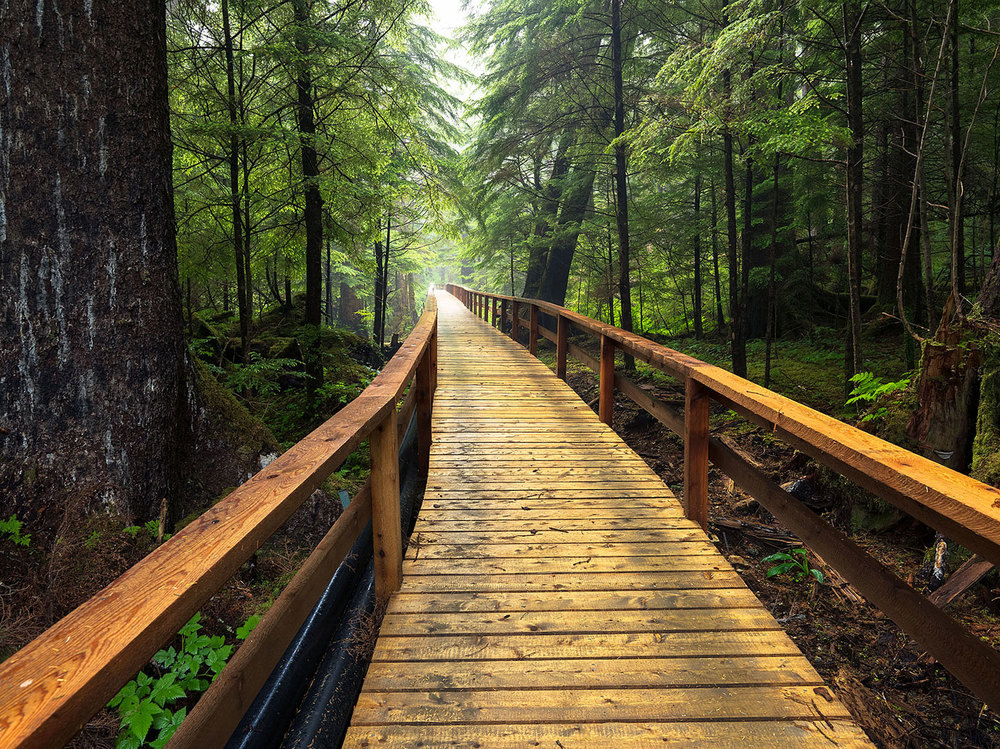 Walkway in the forrest : Alaska