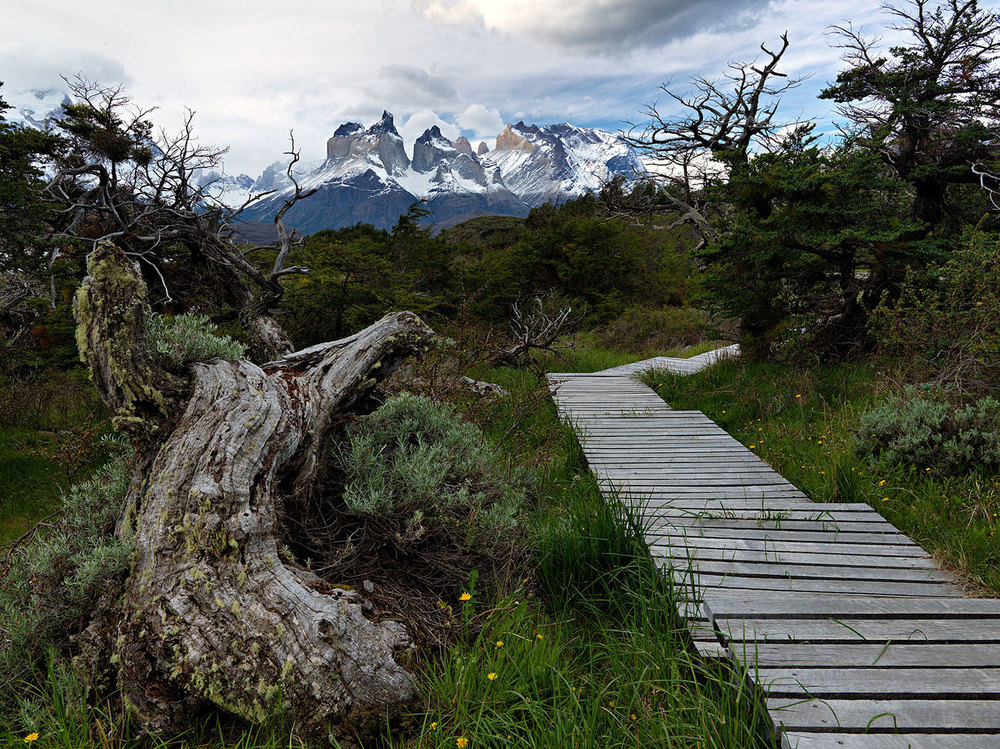 Walkway in Patagonia National Park : Chile