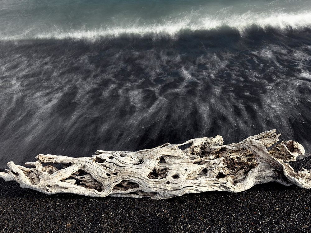 Driftwood in Patagonia National Park : Chile