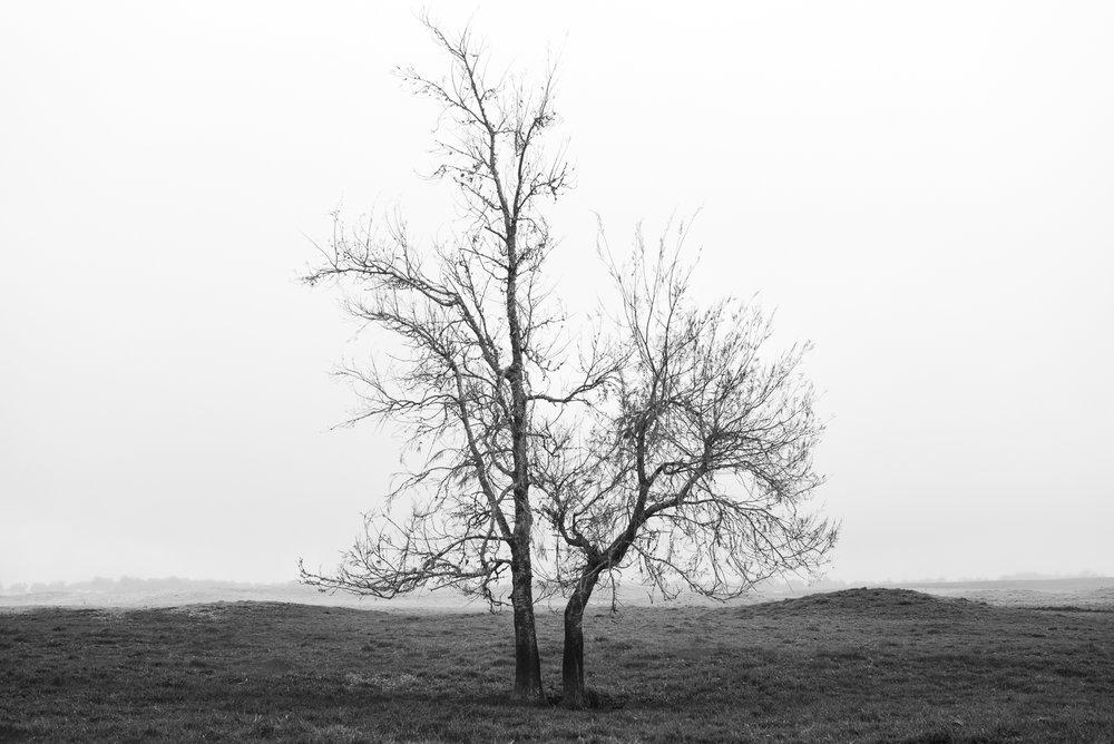 Solitude tree, Big Island 2017