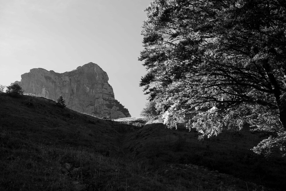 Backlight trees on Alp Weid    Leica Monochrom 1/350s F13 ISO800