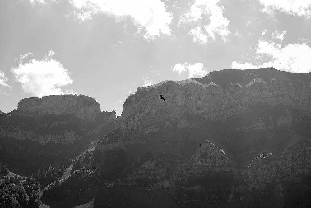 Bird gliding over Aescher    Leica Monochrom 1/250s F16 ISO250