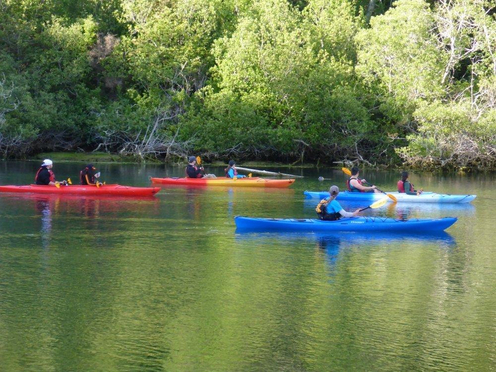 Wildlife kayak tour