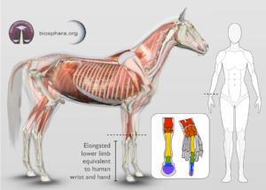 equine hoof care