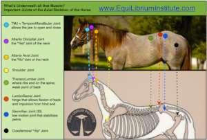 online horse anatomy course