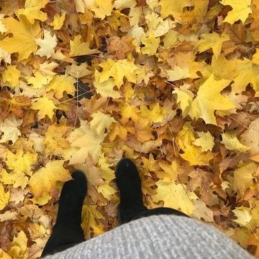 admiring autumn -
