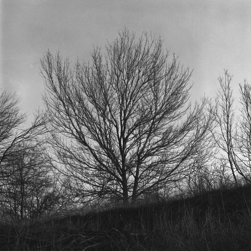 18124cafe4587ac5-landscape_courtneychavanell14.jpg
