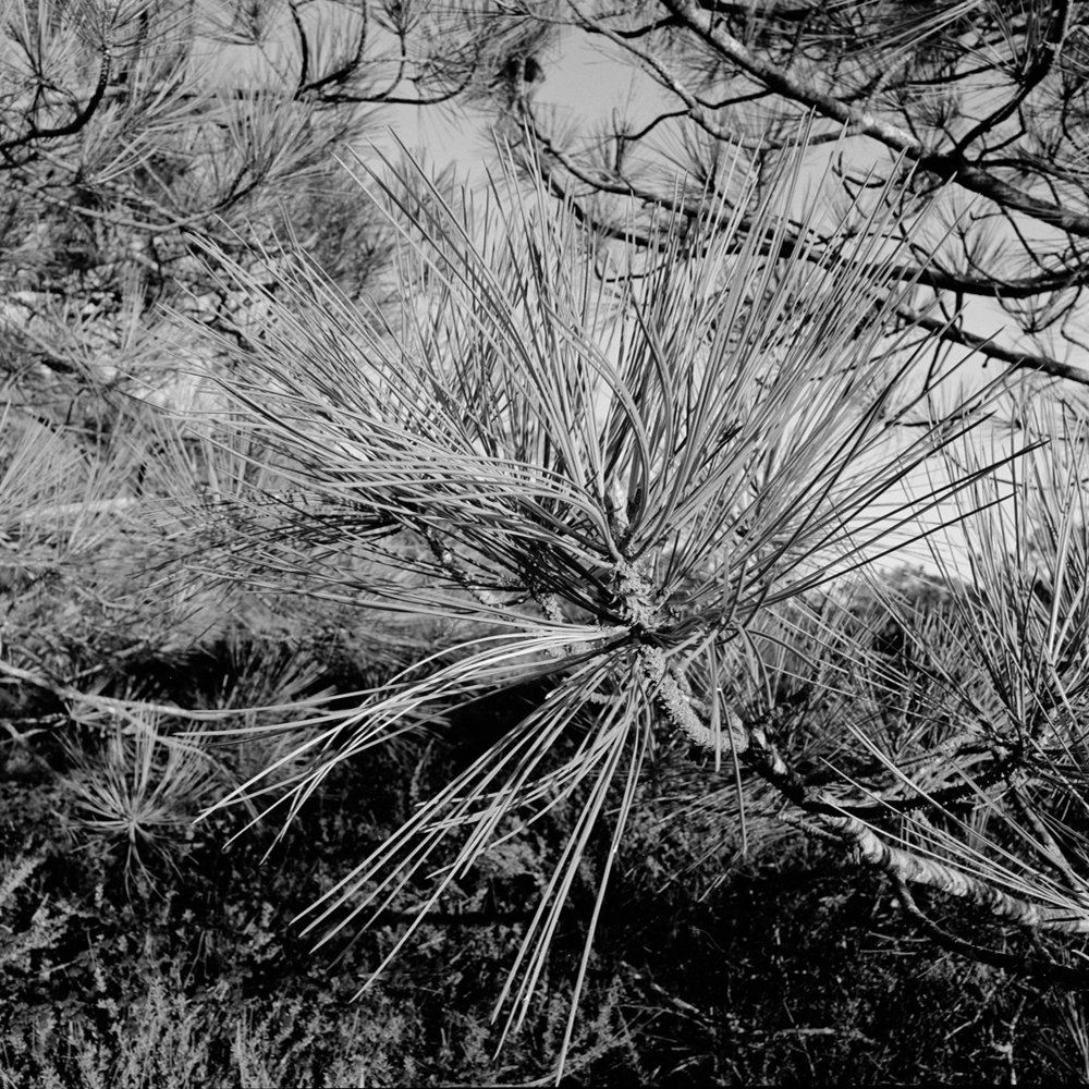d92007f20cacf0b4-landscape_courtneychavanell26.jpg