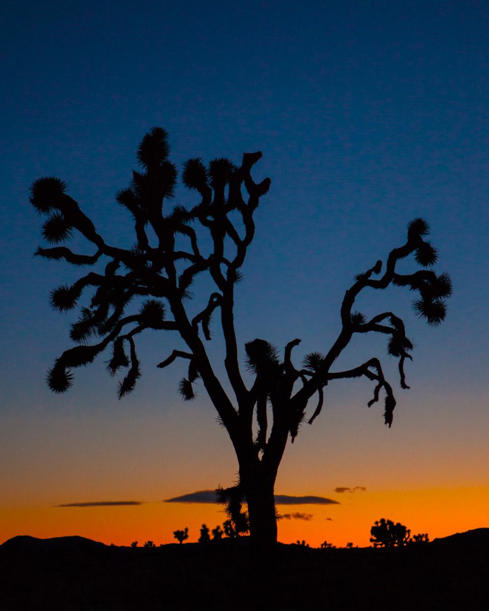 joshua tree_web-80.jpg