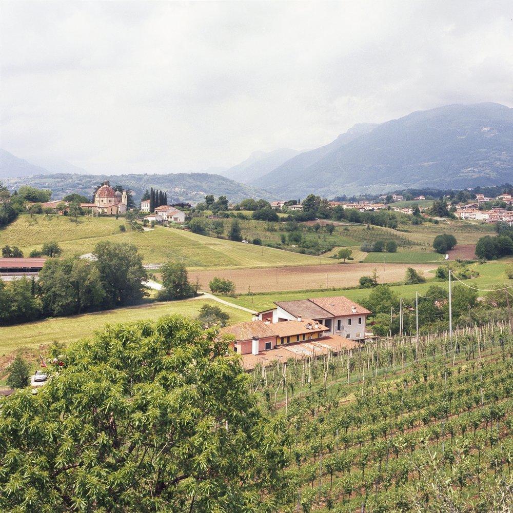 italy vinyard web-1.jpg