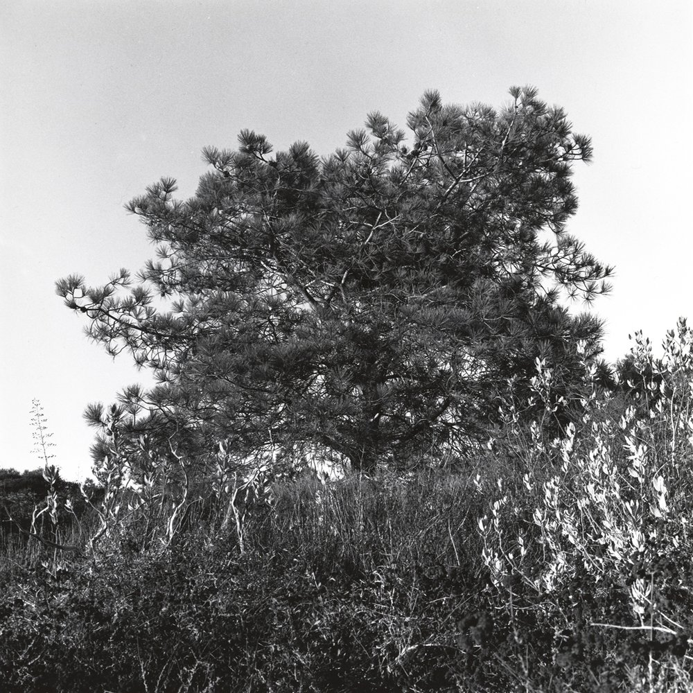 896f5ff3aeefa155-landscape_courtneychavanell21.jpg