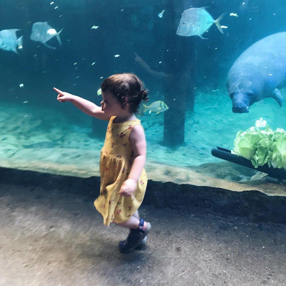 Columbus Zoo, August 2018