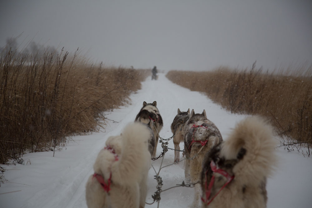Dogsledding | Winter Travel