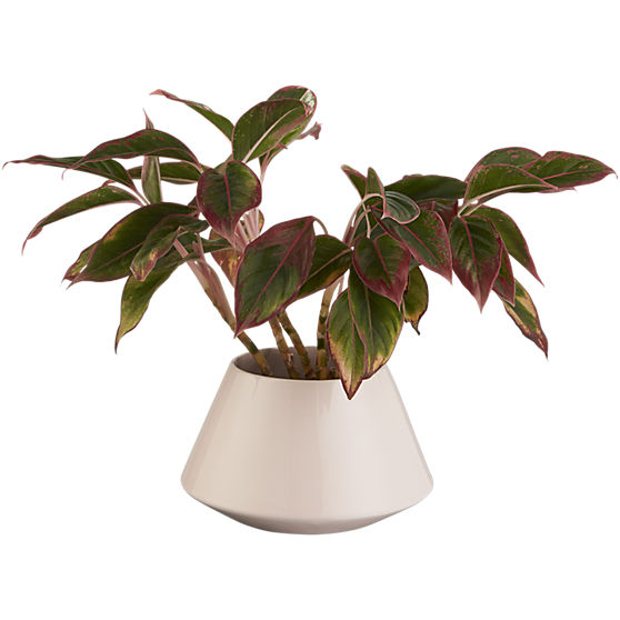 roz-small-pink-planter.jpg