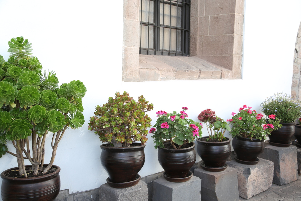 Plants in Cusco