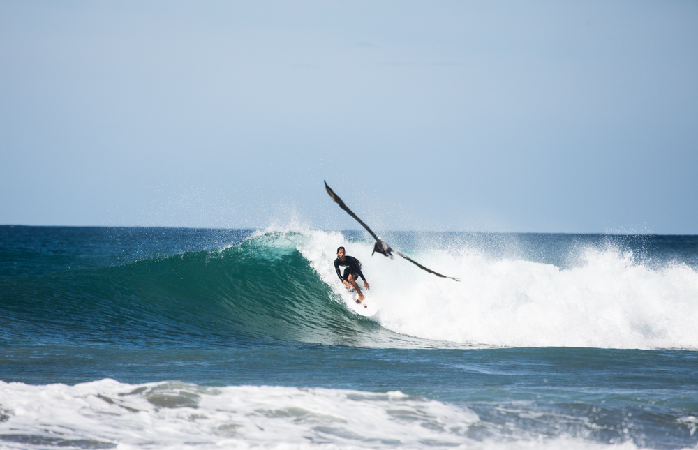 surf-16.jpg