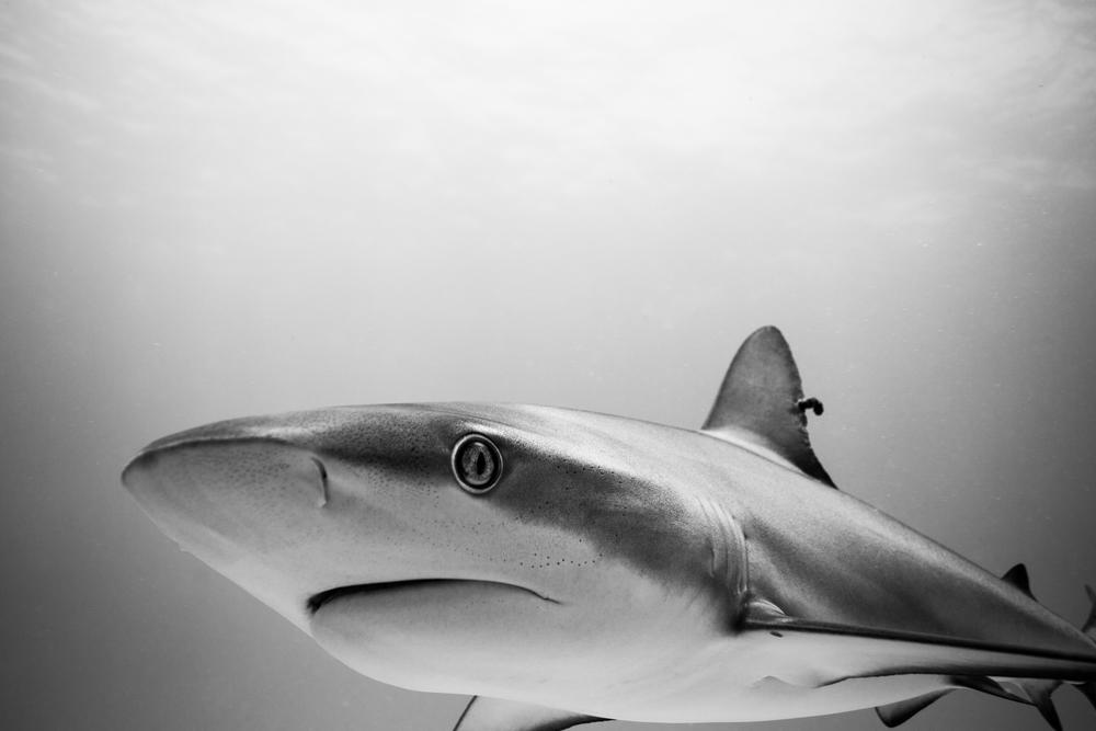 Dive-1.jpg