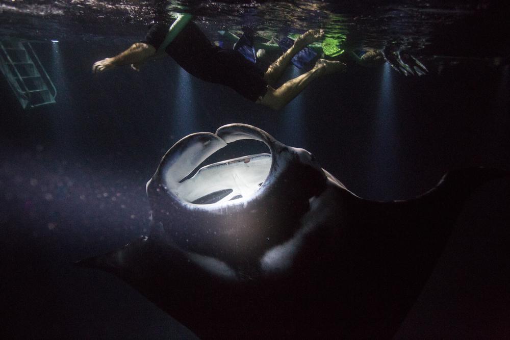 Dive-12.jpg