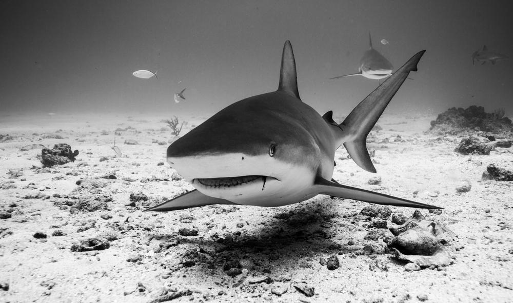 Dive-13.jpg