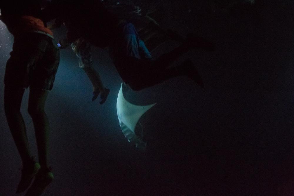 Dive-16.jpg