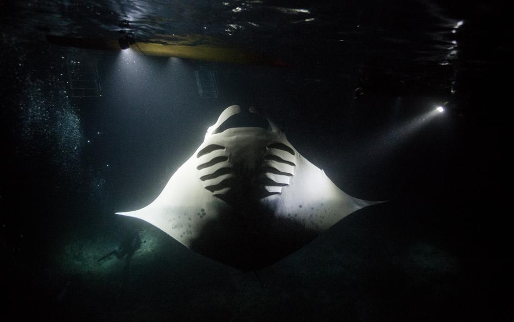 Dive-17.jpg